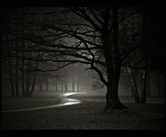 werewolf-forest-night-dark