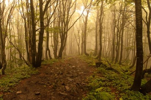 forest_in_fog_by_EdieTH_2