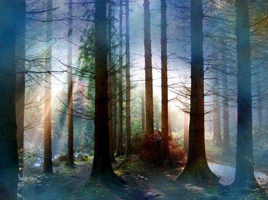 forest_6.jpg