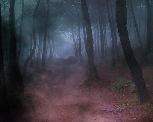 Forest_Fog_Bryce-152770