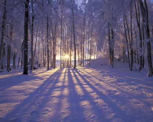 sunrise-among-snow