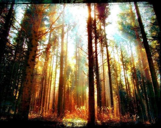 sunlight-woods-forest