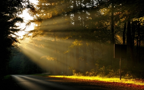 sun_light_trees_forest_road_sign_48017_1920x1200