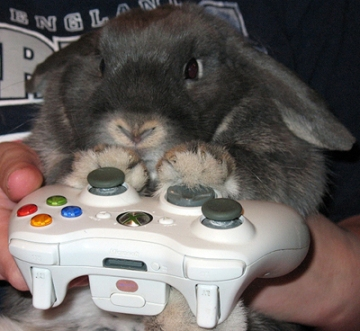 cute_overload_rabbit_xbox