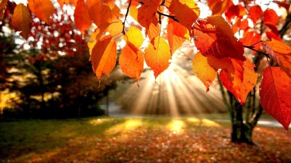 trees-autumn-leaves-fall-sunlight-landscapes-nature