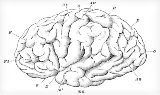 skakos brain image