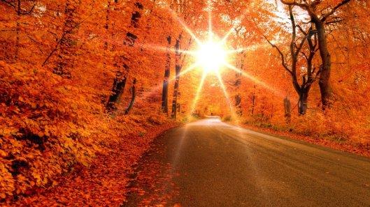 17704__bright-sun-through-forest-in-autumn_p