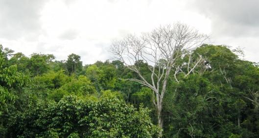 MR_MPalace_Amazon_canopy_free