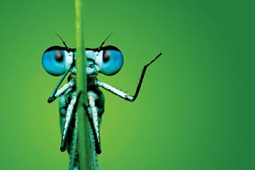 dragonfly_big