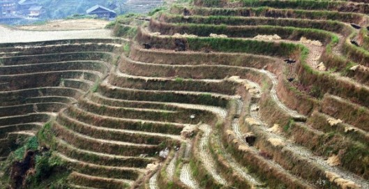 1280px-Rice_terraces,_Guilin,_China_