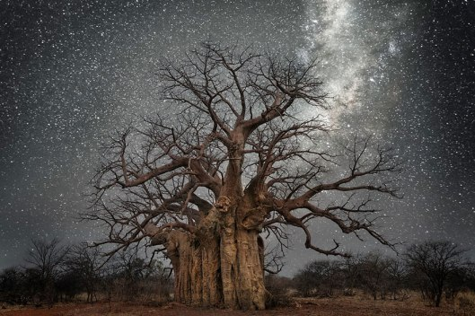 ancient-oldest-trees-starlight-photography-beth-moon-1